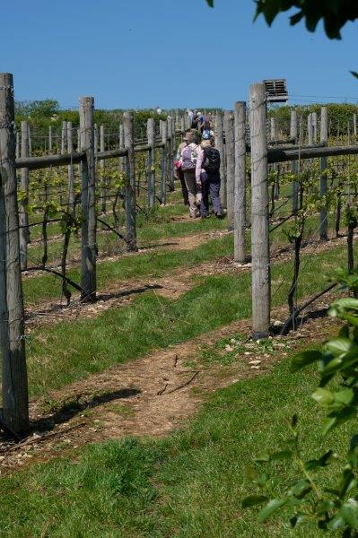 Out of the Park and up into the vineyard