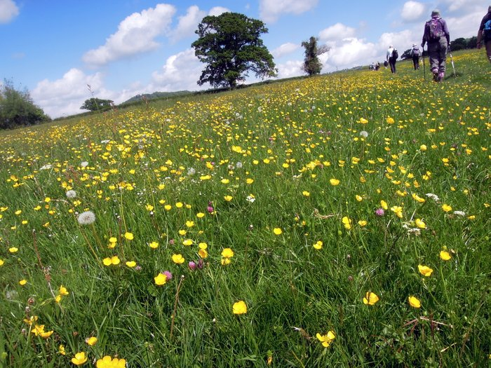 """Buttercups our gold!"""