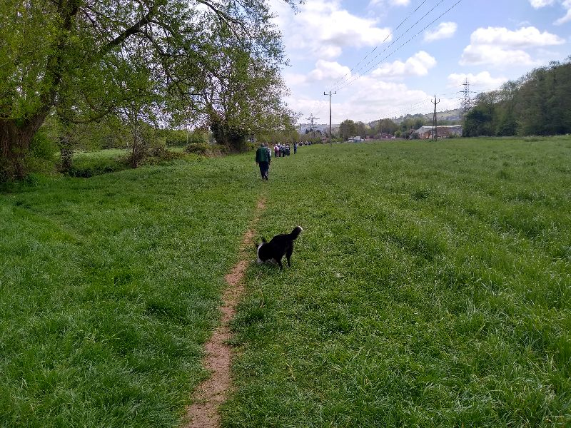No the dog is not part of the walk, everyone else is ahead of me as we return across the fields to King's Stanley