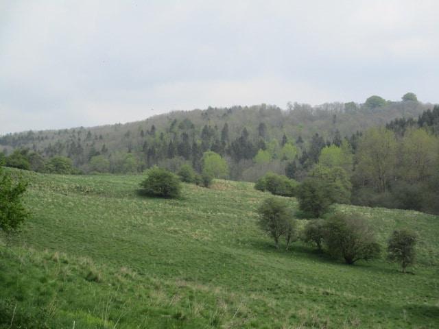 Amazing range of greens