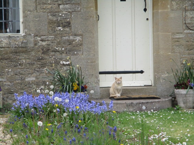 A Miserden cat waits on its doorstep to be let in, as we return to the Carpenters Arms.