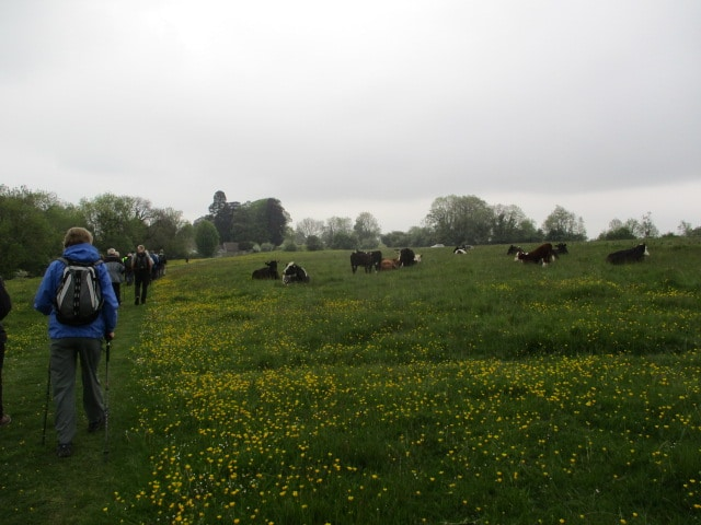 We set off towards Houndscroft where the cows have recently been allowed out on to the common