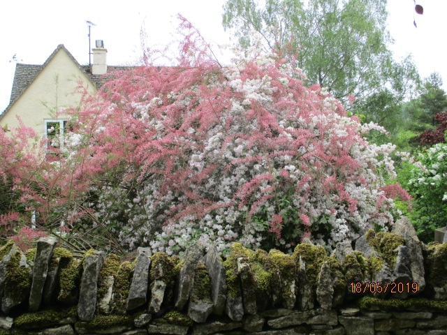 Beautiful flowering shrubs on our way to Brimscombe Hill