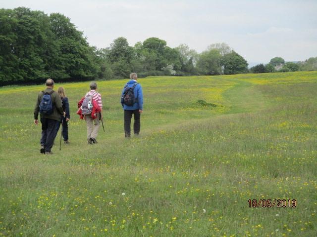 We walk through the buttercups towards Amberley