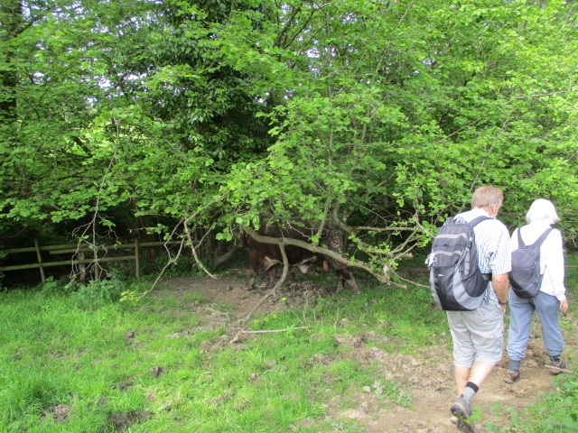 We make for the stile, unaware of what is lurking in the tree on our left