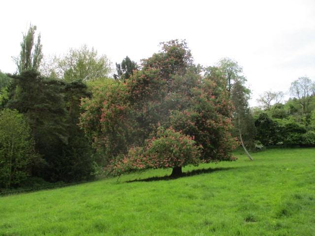 Past a chestnut tree