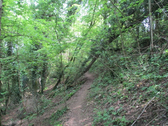 Then a wooded path back to the car park