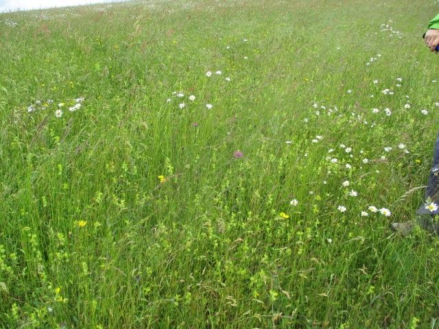 Through a meadow