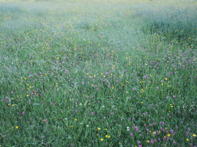 And flower meadows