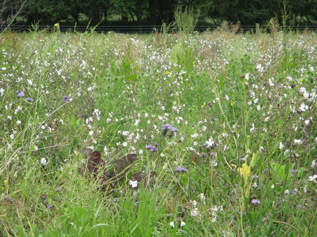 Through a wildflower meadow