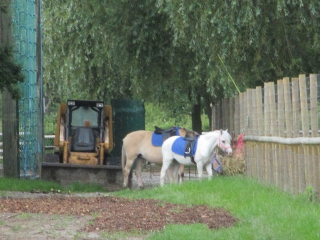 There are pony rides