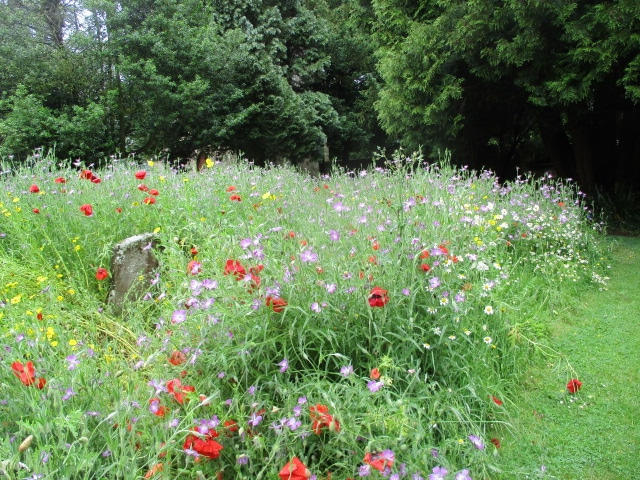 Gwen takes us out to the churchyard where Ray has sown these amazing wildflowers