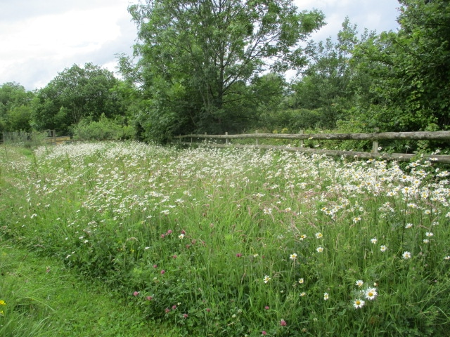 We pass more wildflowers as we walk across the fields back to Brookend.