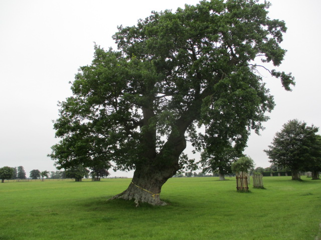 Tie a Yellow Ribbon round the old oak tree