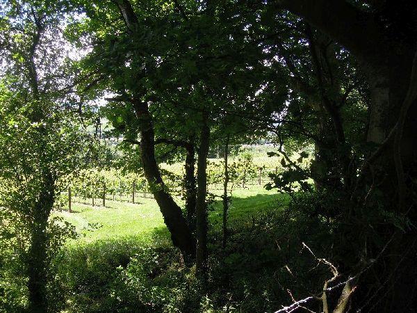 We climb up past vineyards