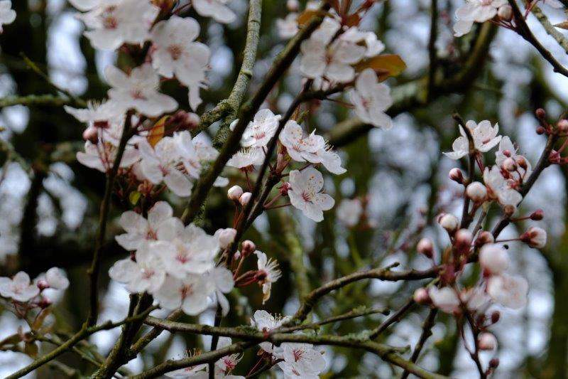 Some early blossom