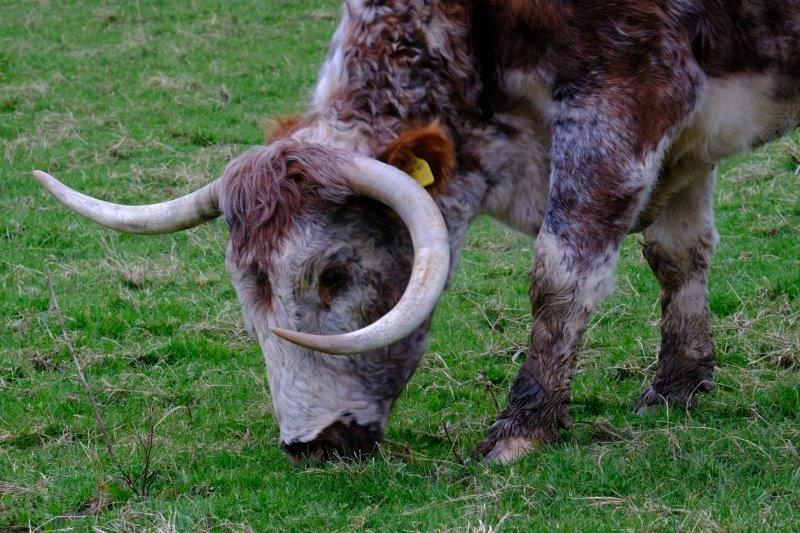 Could do some damage with those horns
