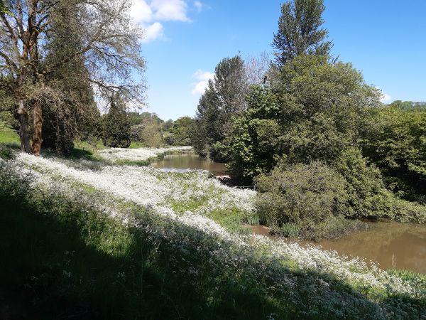 Brimpsfield Park ponds