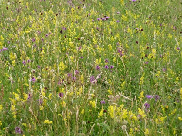 The photographs show flowers such as great burnet, ladies bedstraw, betony, knapweed and many others.